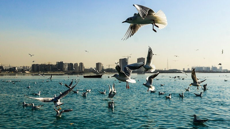 دریاچه تهران آتامدتور